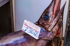 Ψάρια στην ιστορική αγορά Ortigia στοκ φωτογραφίες με δικαίωμα ελεύθερης χρήσης