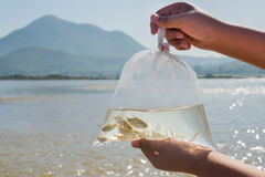 Ψάρια στην πλευρά η πλαστική τσάντα πριν από την απελευθέρωση στον ποταμό Στοκ φωτογραφία με δικαίωμα ελεύθερης χρήσης