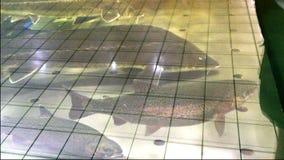 Ψάρια στην υπεραγορά, στο ενυδρείο στην αγορά ψαριών πώληση ψαριών απόθεμα βίντεο