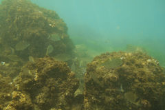 Ψάρια στη θάλασσα, υποβρύχια Στοκ φωτογραφία με δικαίωμα ελεύθερης χρήσης