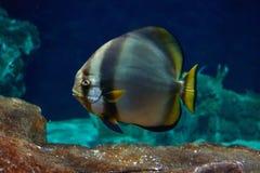 Ψάρια στη θάλασσα Στοκ Φωτογραφία
