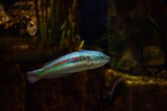Ψάρια στη θάλασσα Στοκ Εικόνες