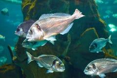 Ψάρια στη θάλασσα Στοκ εικόνες με δικαίωμα ελεύθερης χρήσης