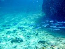 Ψάρια στις Σεϋχέλλες που έχουν ένα μικρό ταξίδι κοντά στους κοκοφοίνικες Anse Στοκ εικόνα με δικαίωμα ελεύθερης χρήσης