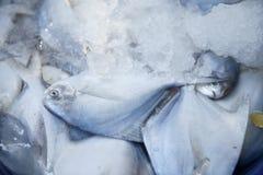 Ψάρια στον πάγο στοκ φωτογραφίες