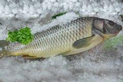 Ψάρια στον πάγο Στοκ φωτογραφίες με δικαίωμα ελεύθερης χρήσης