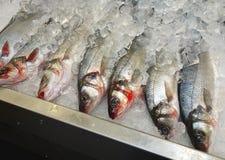 Ψάρια στον πάγο Στοκ Φωτογραφία