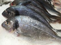 Ψάρια στον πάγο Στοκ Εικόνες