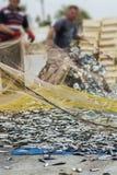 Ψάρια στο δίχτυ του ψαρέματος στοκ φωτογραφίες