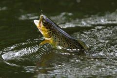 ψάρια στο αγκίστρι Στοκ Εικόνα