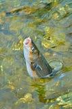 Ψάρια στο γάντζο 18 Στοκ εικόνα με δικαίωμα ελεύθερης χρήσης