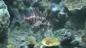 Ψάρια στο ενυδρείο απόθεμα βίντεο
