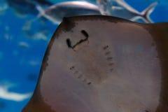 Ψάρια στο ενυδρείο Στοκ Εικόνες