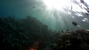 Ψάρια στο κοράλλι στην καθαρή μπλε υποβρύχια Ερυθρά Θάλασσα υποβάθρου απόθεμα βίντεο