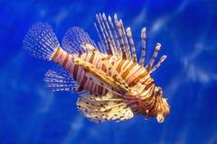 Ψάρια στο νερό Στοκ Εικόνες