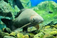 Ψάρια στο ντουλάπι στοκ εικόνες με δικαίωμα ελεύθερης χρήσης
