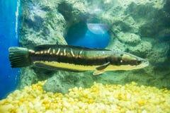 Ψάρια στο ντουλάπι στοκ εικόνα με δικαίωμα ελεύθερης χρήσης