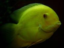 Ψάρια στο σκουλήκι Στοκ φωτογραφία με δικαίωμα ελεύθερης χρήσης