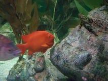 Ψάρια στο σκόπελο ενυδρείων στοκ φωτογραφία με δικαίωμα ελεύθερης χρήσης