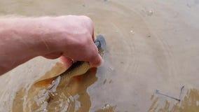 Ψάρια στο χέρι ψαράδων ` s απόθεμα βίντεο