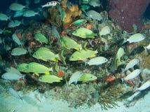 ψάρια συνάθροισης Στοκ Εικόνες