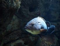Ψάρια της Ελλάδας Στοκ εικόνα με δικαίωμα ελεύθερης χρήσης