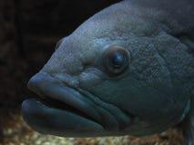 Ψάρια της Ελλάδας Στοκ εικόνες με δικαίωμα ελεύθερης χρήσης