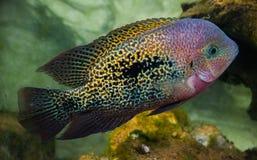 Ψάρια του Σαν Φρανσίσκο στο πάρκο Στοκ Εικόνα