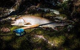 Ψάρια τροπαίων Στοκ Εικόνα