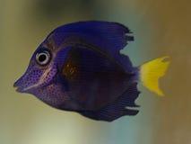 ψάρια τροπικά Στοκ εικόνα με δικαίωμα ελεύθερης χρήσης