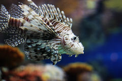 ψάρια τροπικά Στοκ εικόνες με δικαίωμα ελεύθερης χρήσης