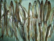 ψάρια, τρόφιμα, φρέσκα, αγορά, θαλασσινά, αλιεία, σαρδέλλα, θάλασσα, αντσούγια, ακατέργαστη, σύλληψη, υγιής, ρέγγες, ασήμι, ζώο,  στοκ φωτογραφία με δικαίωμα ελεύθερης χρήσης
