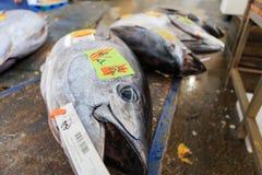 Ψάρια τόνου Στοκ εικόνες με δικαίωμα ελεύθερης χρήσης