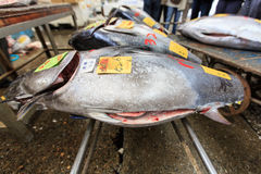Ψάρια τόνου Στοκ εικόνα με δικαίωμα ελεύθερης χρήσης