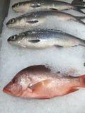 Ψάρια λυθρινιών και γάλακτος Στοκ Εικόνες