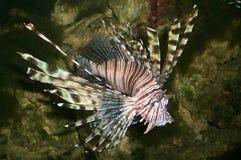 ψάρια φοβερά Στοκ εικόνες με δικαίωμα ελεύθερης χρήσης