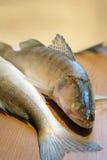 ψάρια φρέσκα στοκ φωτογραφία με δικαίωμα ελεύθερης χρήσης