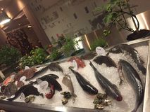 ψάρια φρέσκα Στοκ Φωτογραφία