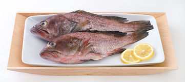 ψάρια φρέσκα στοκ φωτογραφίες με δικαίωμα ελεύθερης χρήσης