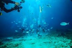 Ψάρια φωτογραφιών δυτών σκαφάνδρων σε Comino στην κεντρική Μεσόγειο στοκ εικόνα