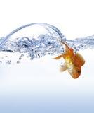 ψάρια χρυσά Στοκ φωτογραφία με δικαίωμα ελεύθερης χρήσης