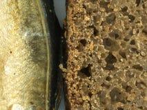 ψάρια ψωμιού Στοκ Εικόνες