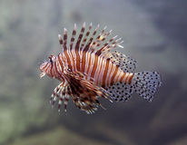 ψάρια Στοκ εικόνες με δικαίωμα ελεύθερης χρήσης
