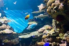 Ψάρια στοκ φωτογραφίες με δικαίωμα ελεύθερης χρήσης