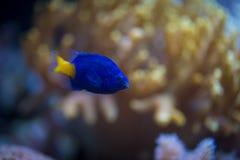 Ψάρια στοκ φωτογραφία