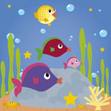 Ψάρια Στοκ Εικόνες