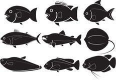 Ψάρια Στοκ Εικόνα
