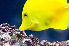 ψάρια Στοκ φωτογραφία με δικαίωμα ελεύθερης χρήσης