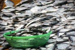 Ψάρια Alof Στοκ Εικόνα