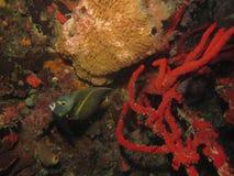 Ψάρια Amgel στοκ φωτογραφία με δικαίωμα ελεύθερης χρήσης